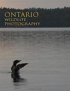 Ontario Wildlife Photography