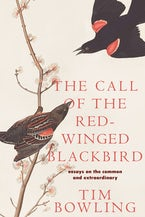 The Call of the Red-winged Blackbird